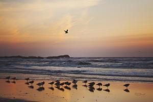 Kalaloch Birds III by Laura Marshall