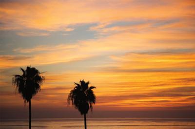 Sunset Palms III by Laura Marshall