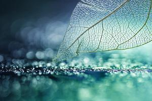 White Transparent Skeleton Leaf with Beautiful Texture on a Turquoise Abstract Background on Glass by Laura Pashkevich