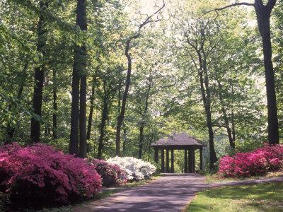 Azalea Way, Botanical Gardens, Bronx, NY