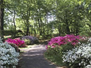 Azalea Way, Botanical Gardens, Bronx, NY by Lauree Feldman
