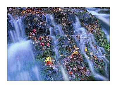 Laurel Creek cascades, Great Smoky Mountains National Park, Tennessee-Tim Fitzharris-Art Print