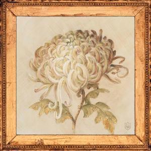 Chrysanthemum Floret Detail by Lauren Hamilton
