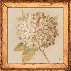 Hydrangea Floret Detail by Lauren Hamilton