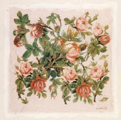 Buisson de Roses II