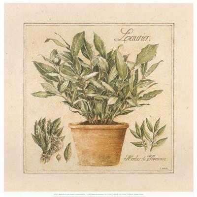Herbes de Provence I