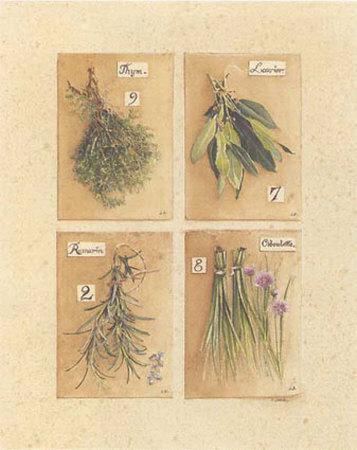 Herbes, Thym