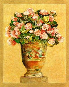Hortensia Rose by Laurence David