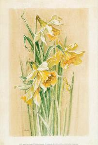 Jonquilles I by Laurence David