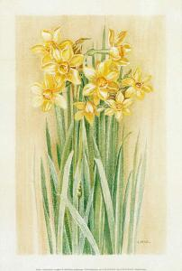 Jonquilles IV by Laurence David