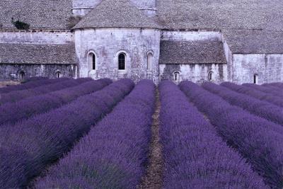 https://imgc.artprintimages.com/img/print/lavender-abbey_u-l-q1b80a40.jpg?p=0