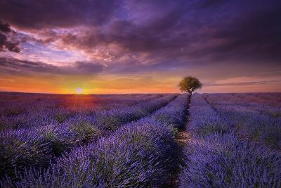 Lavender at Sunset-Marco Carmassi-Photographic Print