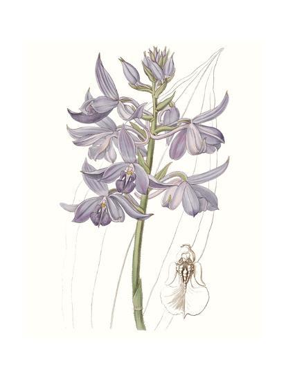 Lavender Beauties III--Art Print