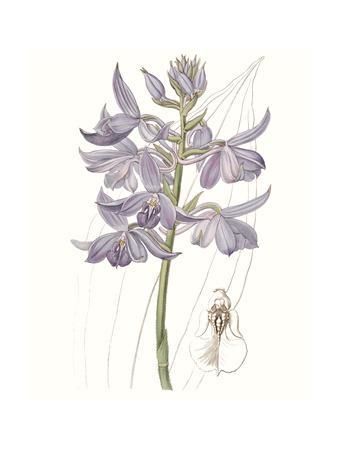 https://imgc.artprintimages.com/img/print/lavender-beauties-iii_u-l-q1c4jfb0.jpg?p=0