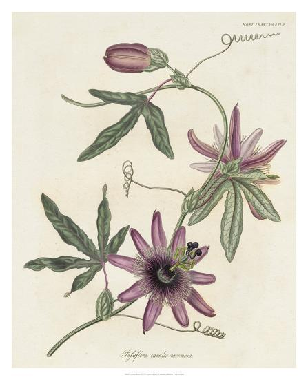 Lavender Blooms II-Unknown-Giclee Print