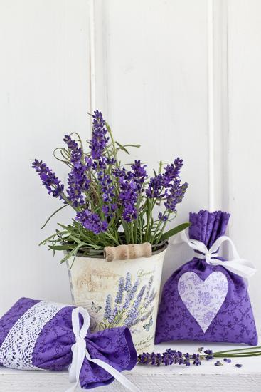 Lavender, Blossoms, Fragrance Sachets, Flowerpot-Andrea Haase-Photographic Print