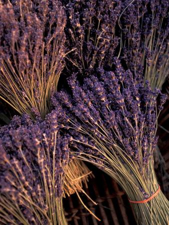 https://imgc.artprintimages.com/img/print/lavender-bunches-bouches-du-rhone-france_u-l-p6i28y0.jpg?p=0