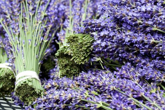 Lavender Bunches I-Dana Styber-Photographic Print