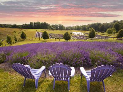 Lavender Chairs, Horton Bay, Michigan U002714 Photographic Print By Monte  Nagler | Art.com