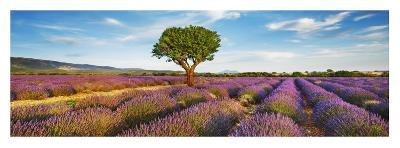 Lavender field and almond tree, Provence, France-Frank Krahmer-Giclee Print