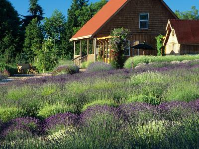 Lavender Field and Gift Shop, Sequim, Washington, USA-Jamie & Judy Wild-Photographic Print