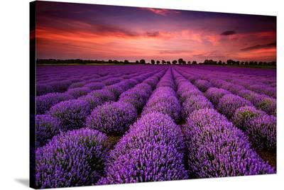Lavender Field Sunset Provence--Stretched Canvas Print