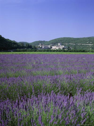 Lavender Fields and the Village of Montclus, Gard, Languedoc-Roussillon, France-Ruth Tomlinson-Photographic Print