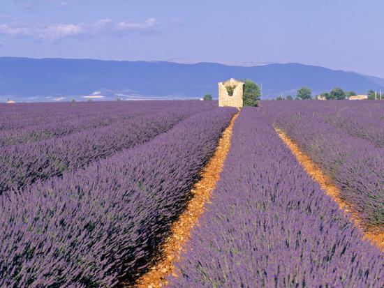 Lavender Fields, Provence, France-Jon Arnold-Photographic Print