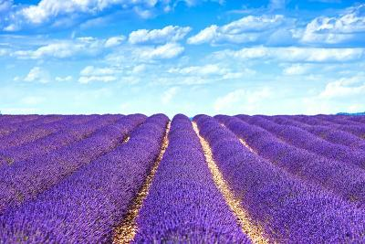 Lavender Flower Blooming Fields Endless Rows-stevanzz-Photographic Print