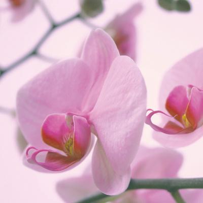 https://imgc.artprintimages.com/img/print/lavender-mist-i_u-l-f5jreq0.jpg?p=0