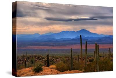 Sonoran Desert Floor