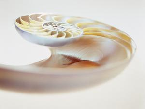 Nautilus Shell by Lawrence Lawry