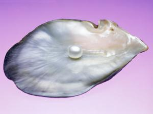 Pearl In a Shell by Lawrence Lawry