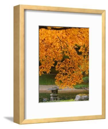 Autumn Leaves at Nitobe Japanese Garden, University of British Columbia, Vancouver, Canada