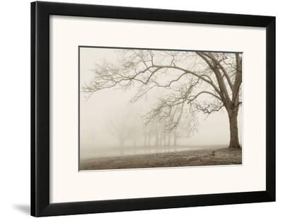 Layers of Trees I-Igor Svibilsky-Framed Art Print