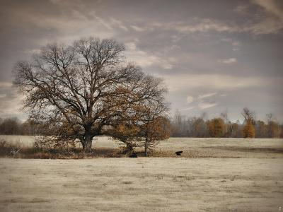 Lazy Autumn Day-Jai Johnson-Giclee Print
