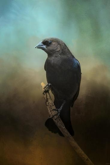 Lazy Bird-Jai Johnson-Giclee Print