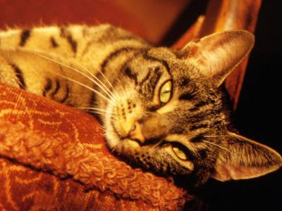 Lazy Cat on the Sofa-Winfred Evers-Photographic Print