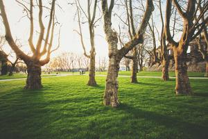 Panoramic View of a Row of Old Trees with Fresh Green Grass in a Scenic Public Park by lbryan