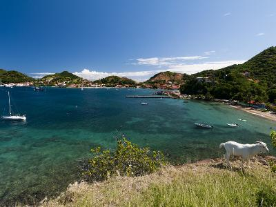 Le Bourg, Iles Des Saintes, Terre de Haut, Guadeloupe, French Caribbean, France, West Indies-Sergio Pitamitz-Photographic Print