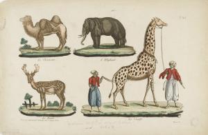 Le chameau, l'éléphant, le daim, la girafe