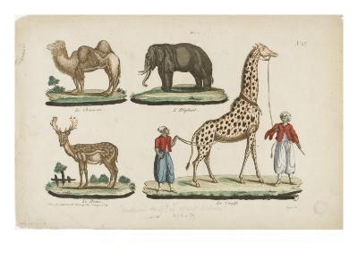 Le chameau, l'?l?phant, le daim, la girafe--Giclee Print