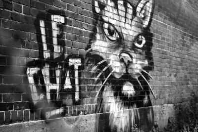 Le Chat Graffiti--Photo