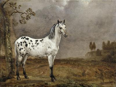 Le Cheval pie-Paulus Potter-Giclee Print