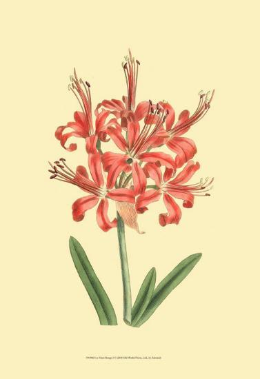 Le Fleur Rouge I-Sydenham Teast Edwards-Art Print