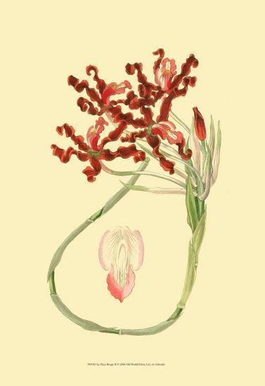 Le Fleur Rouge II-Sydenham Teast Edwards-Art Print