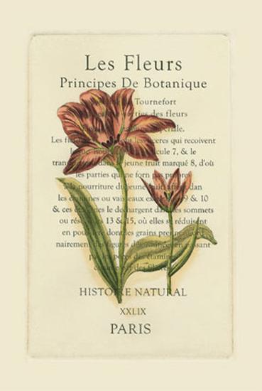 Le Fleurs Botanique II--Art Print