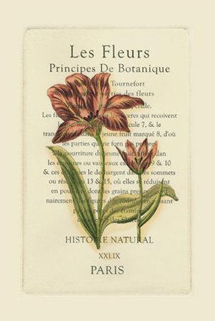 https://imgc.artprintimages.com/img/print/le-fleurs-botanique-ii_u-l-etfrq0.jpg?p=0