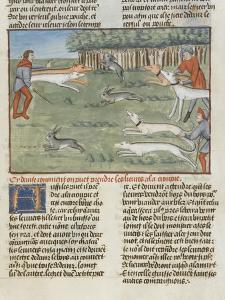 Le Livre de la chasse de Gaston Phébus : les lévriers coursent les lièvres