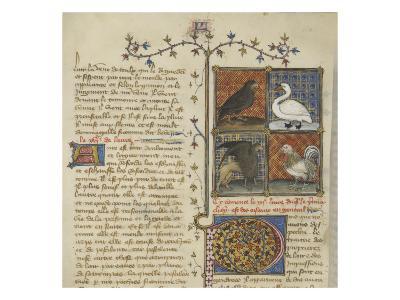 Le Livre des propriétés des choses (De proprietatibus rerum)--Giclee Print